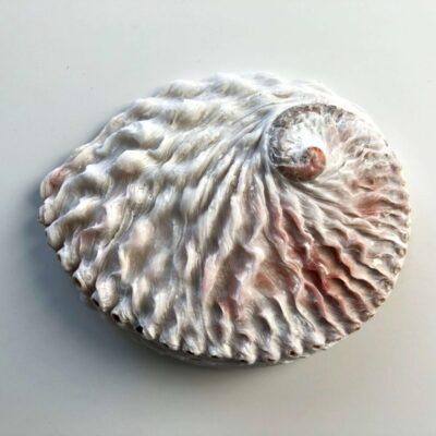 60114-croll-denecke-abalone-merekarbist-seebialus-soap-dish