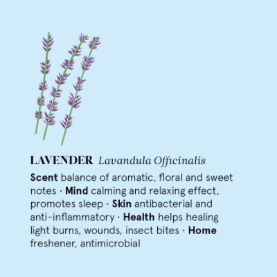 TN-E12-LAV-the-nature-of-things-lavendel-eeterlik-oli-lavender-essential-oil-12-ml
