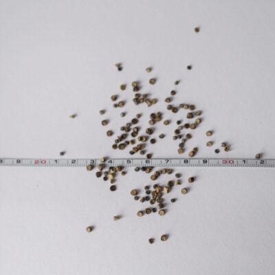 VT-mets-kass-eeriksaare-mets-kassinaeri-seemned