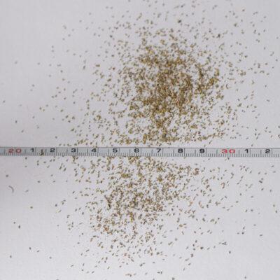 VT-teekum-eeriksaare-teekummeli-seemned-mahe